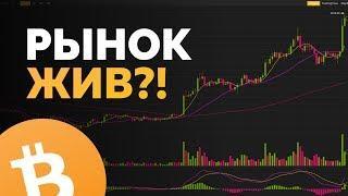 БИТКОИН ЖИВ? РОСТ АЛЬТКОИНОВ ПРОДОЛЖИТСЯ? | Обзор bitcoin и рынка криптовалют